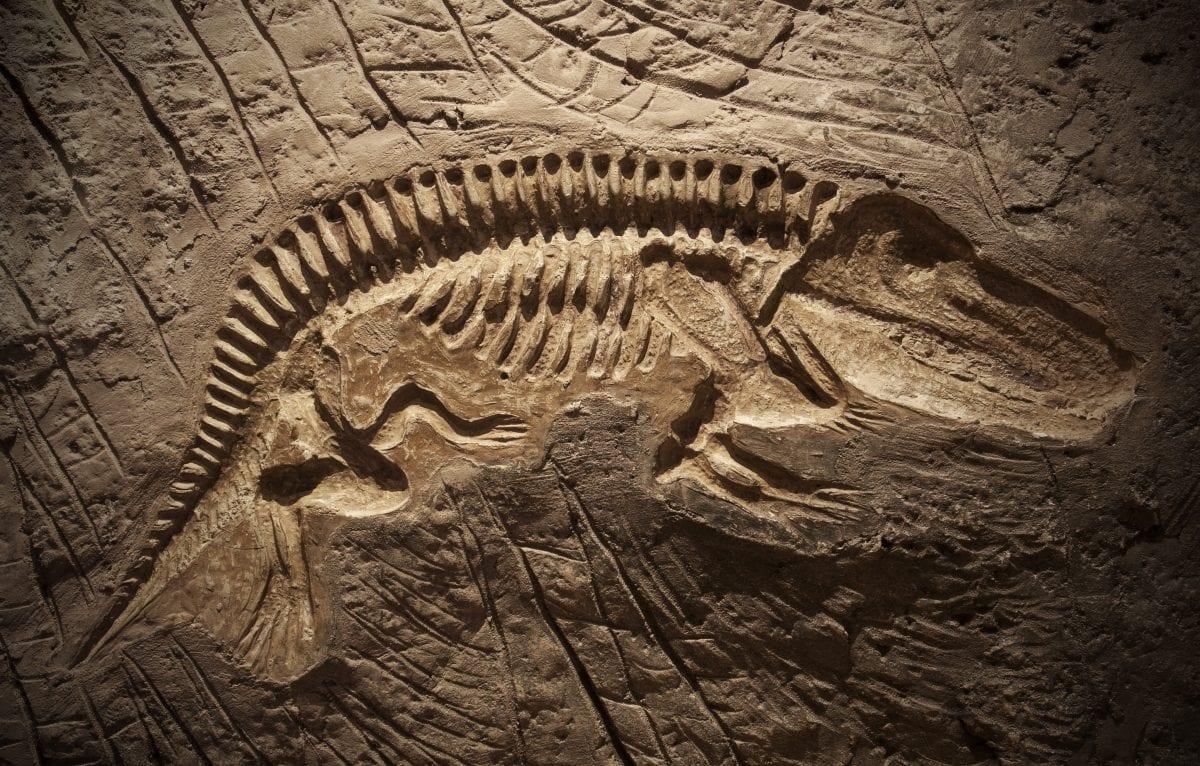 Dinosaur Fossils!